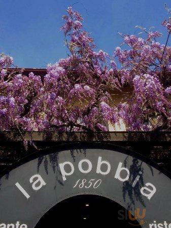 Il nostro glicine saluta ogni anno la primavera che arriva!