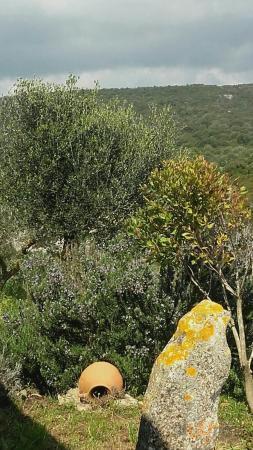 Aisara