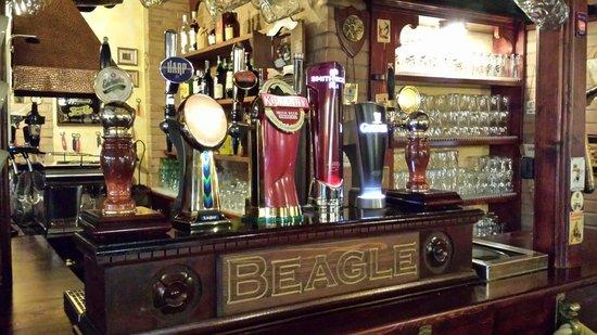Beagle, San Benedetto Del Tronto