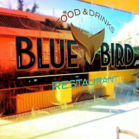 Blue Bird, Offida