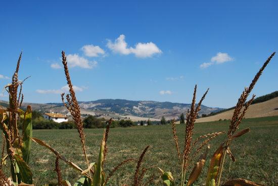 Agriturismo Il Gelso, Urbino