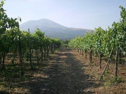 Cantina Del Vesuvio, Trecase