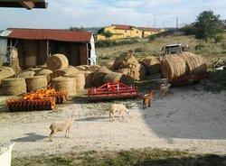 Agriturismo Martone, Rocca San Felice