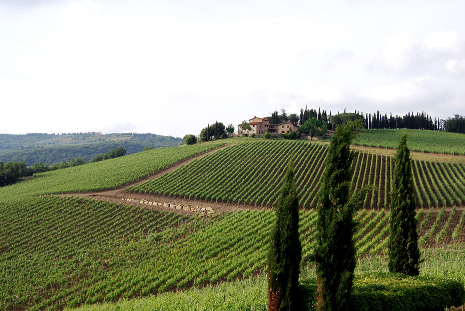 Winery Tour in Tuscany