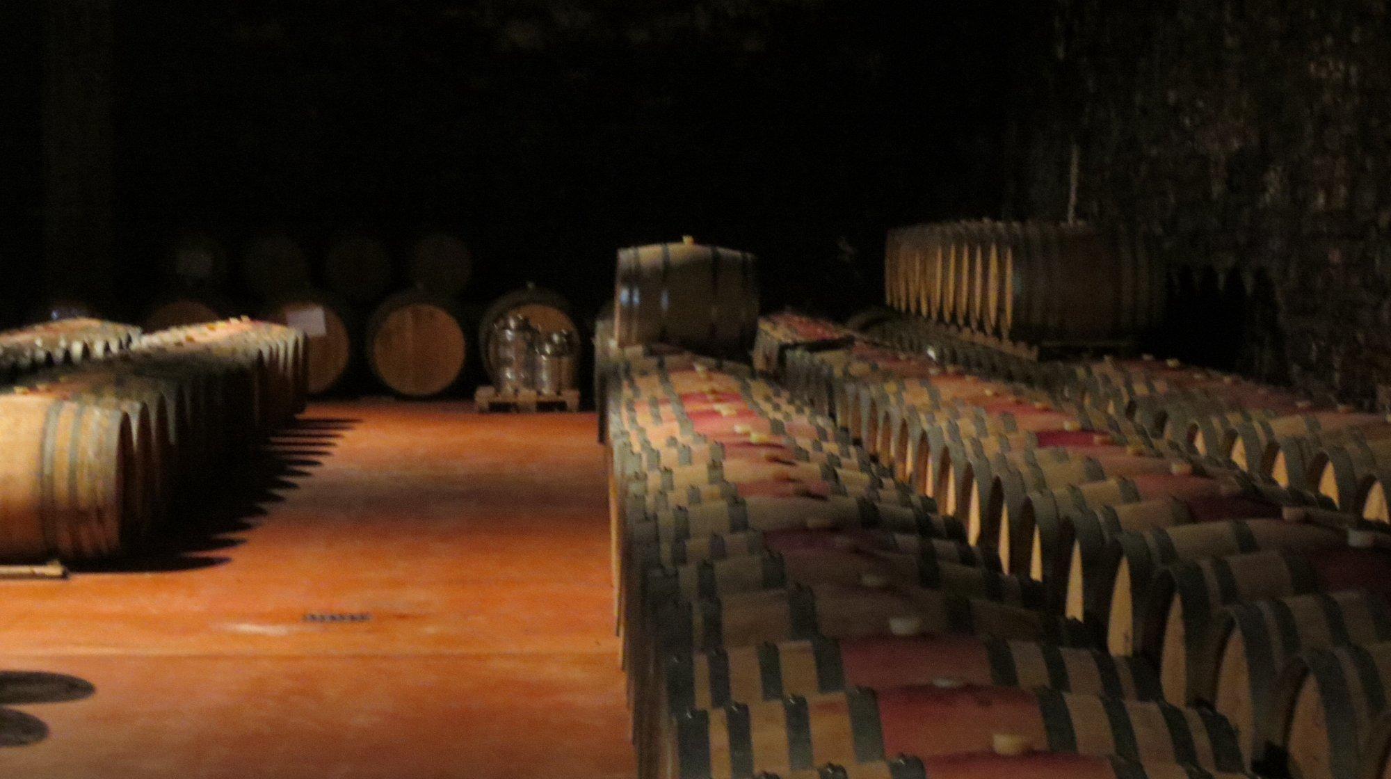 Langa Wine Tour