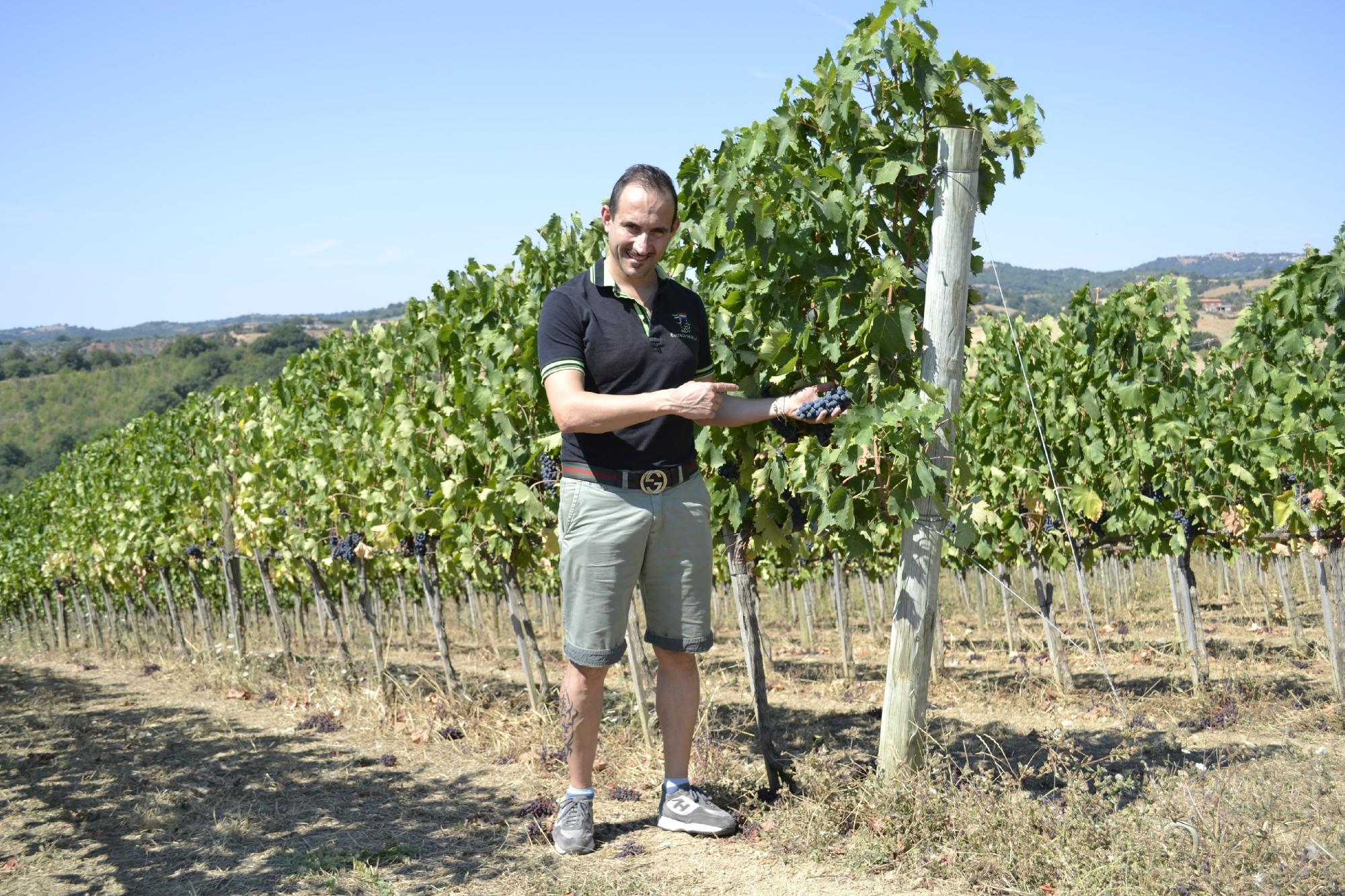 Maremma Wine Tour - Private Day Tours