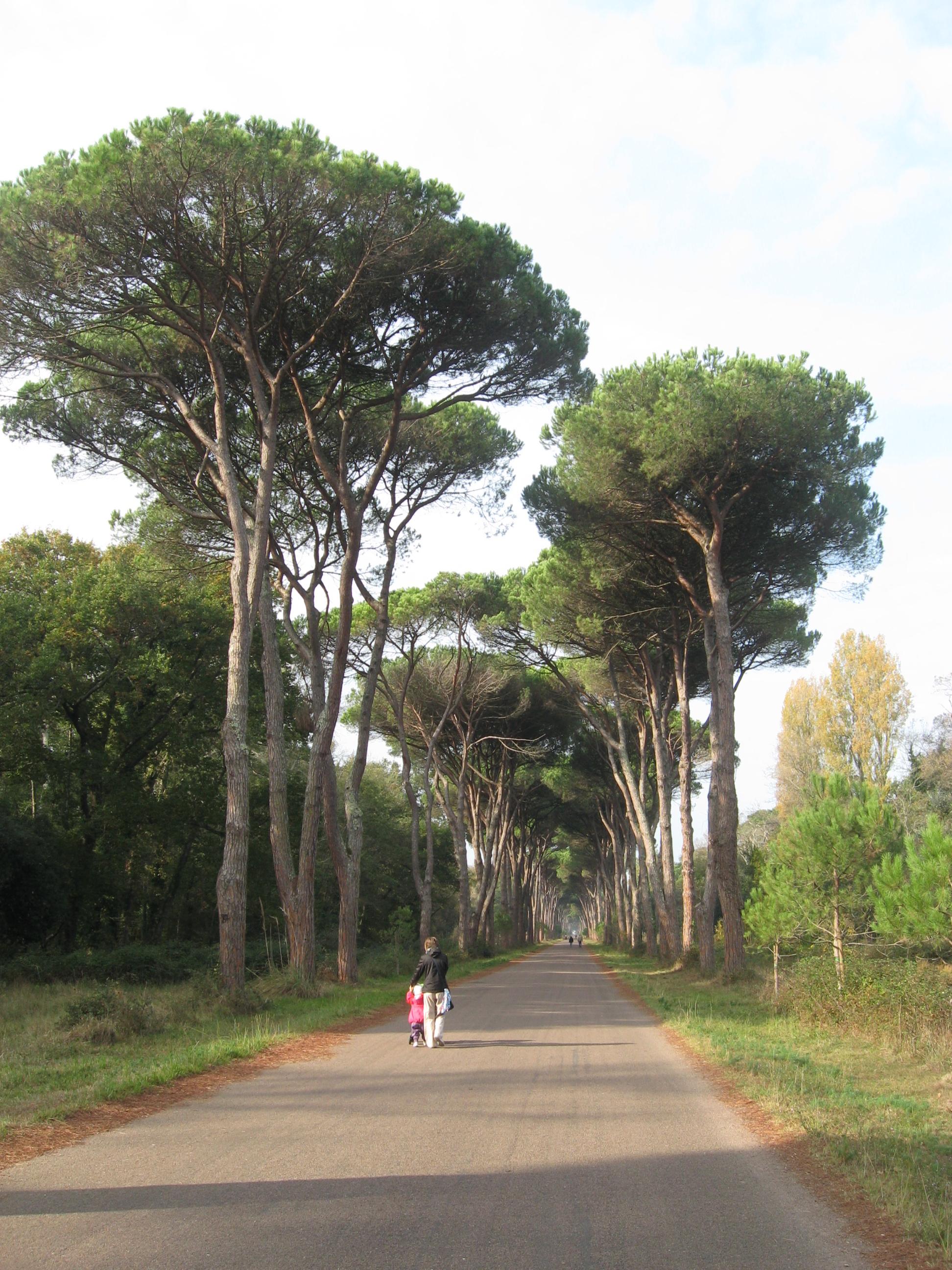 Parco regionale Migliarino San Rossore Massaciuccoli