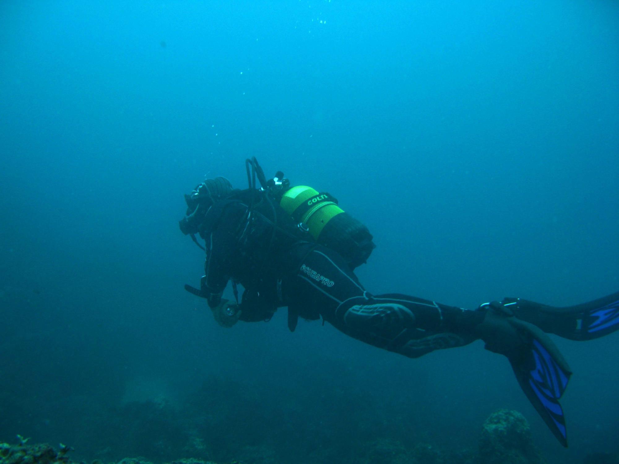 Bluewave Diving